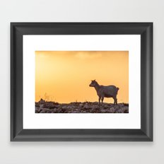 Goat baby sunset E5-5789 Framed Art Print