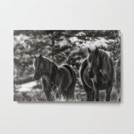 Horses of provence Metal Print