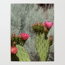 Cacti in Bloom - 3 Poster