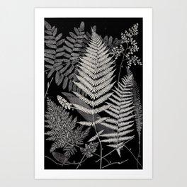 Botanical Ferns Art Print