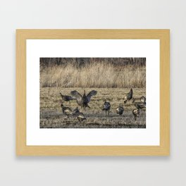 Flock of Wild Turkeys Framed Art Print