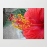 hibiscus Canvas Prints featuring Hibiscus by BACK to THE ROOTS