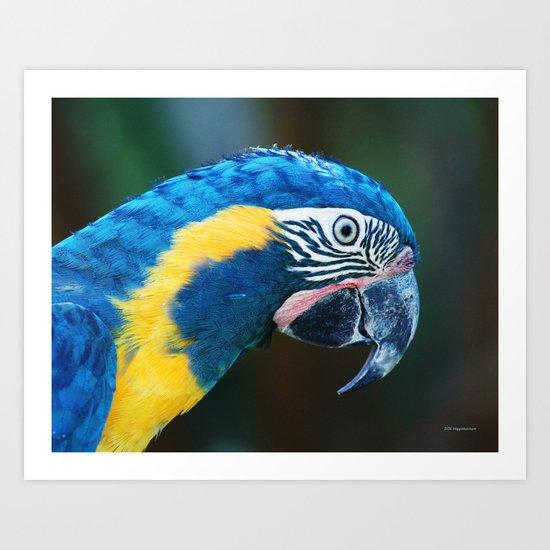 Blue Throated Macaw Art Print