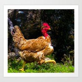 crazy chicken running Art Print