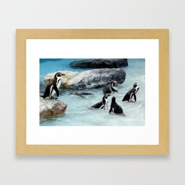 Penguins. Framed Art Print