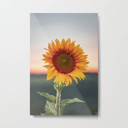 Soft Sunsets & Bright Sunflowers Metal Print