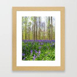 Hallerbos Bluebells Framed Art Print