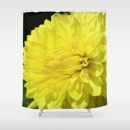 Glowing Yellow Dahlia Shower Curtain