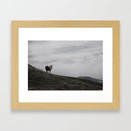 A Pony in the Pyrenees Framed Art Print