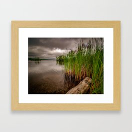 Driftwood And Cattails Framed Art Print