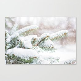 Winter Evergreen Canvas Print
