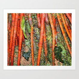 The Strong red ROOTS of The Sierra Palm in El Yunque rainforest PR Art Print