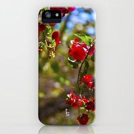Bougainvillea II iPhone Case