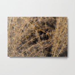 Ornamental grass Metal Print
