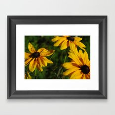 Black Eyed Susans Framed Art Print