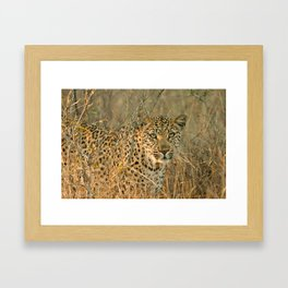 Ntsumi Framed Art Print