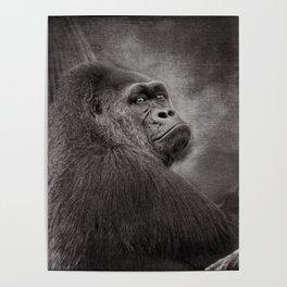 Gorilla. Silverback. BN Poster