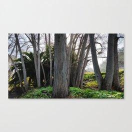 SDRV   Morning Mist Canvas Print