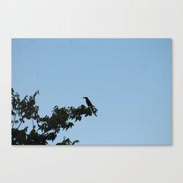 Busy Bird Canvas Print