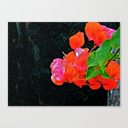 Contrasting flowers Canvas Print