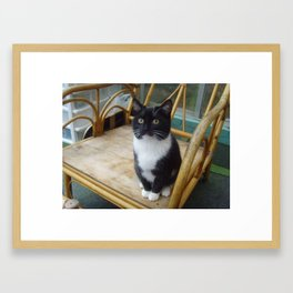 Socks the kitten  Framed Art Print