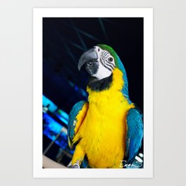 The most colored bird Art Print