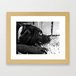 Molly Framed Art Print