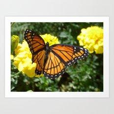 Monarch 2014 Art Print