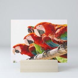 Red macaws Mini Art Print
