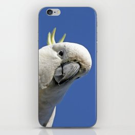 Cockatoo sees you while your sleeping iPhone Skin