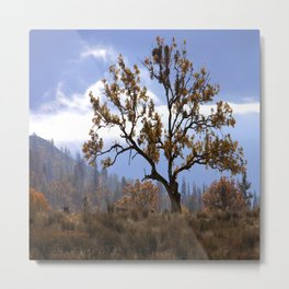 Early morning fog in the valley Metal Print