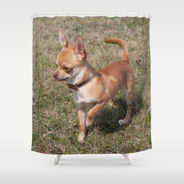 Chihuahua Puppy Shower Curtain