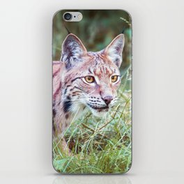Lynx in the grass iPhone Skin