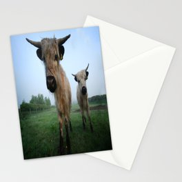 Young White High Park Cattle Stationery Cards