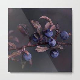 Purple Autumn Berries close up Metal Print