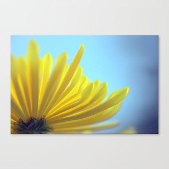 Yellow Chrysanthemum 301 Canvas Print