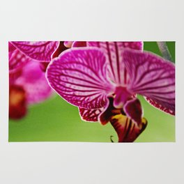 Close up Orchid #4 Rug