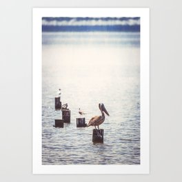 Gulf Coast Peace Art Print
