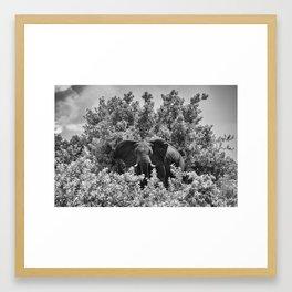 B&W Elephant (Chobe National Park) Framed Art Print