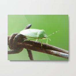 barbed wire stink bug Metal Print