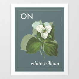 Provincial Flowers - Ontario Art Print