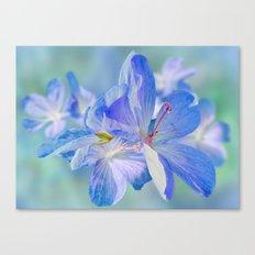 FLOWERS - Geranium endressii Canvas Print