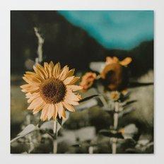 Sunflower Daze Canvas Print