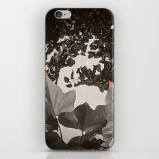 All for The Sun iPhone & iPod Skin