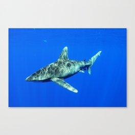 Oceanic Whitetip Shark Canvas Print