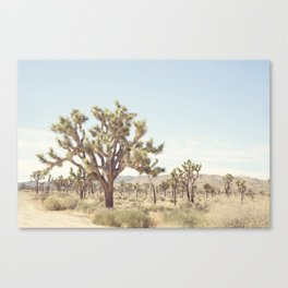 Pale Desert Canvas Print