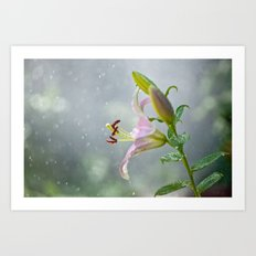 Stargazer Lily 2845 Art Print