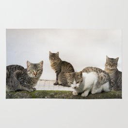 Picture of cats Rug