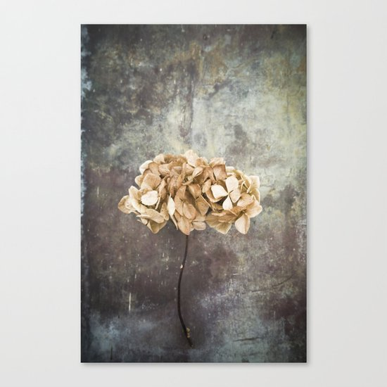 Dried Hydrangea Canvas Print