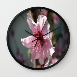 Close Up of Peach Tree Blossom Wall Clock